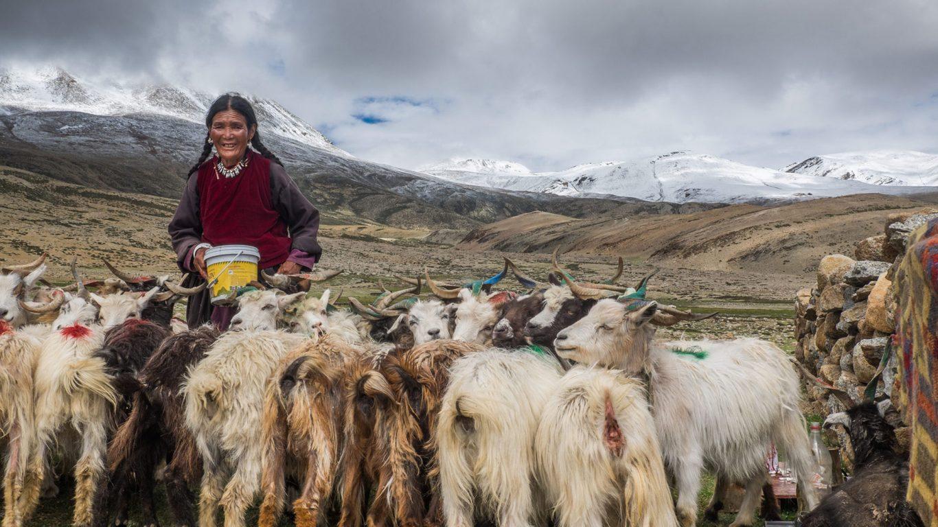 Ladakhis